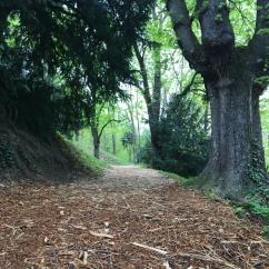 walk/hike to Petrin Tower