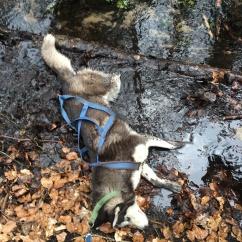 Eda's mud bath