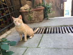 Stray cat in Pitigliano